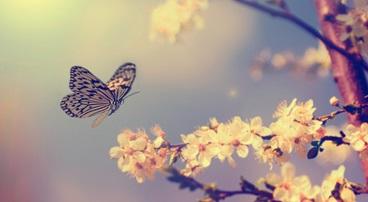'De Vlinder